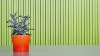 arrosage automatique plantes