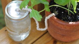 arroser plantes pendant absence