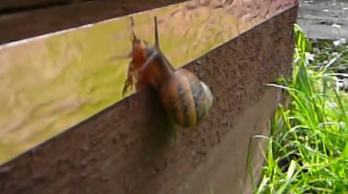 Marre des Escargots Qui Mangent vos Fleurs ? Voici le Répulsif Qu'ils Vont Détester !