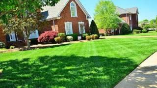 astuce pelouse bien verte