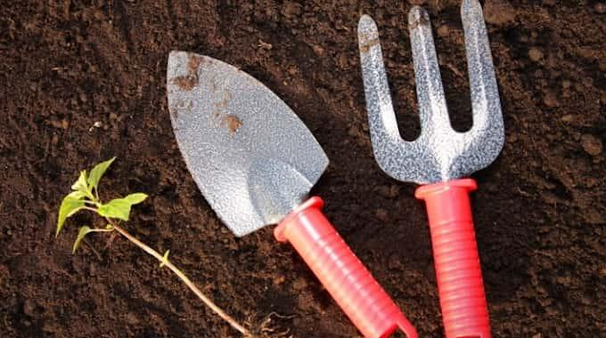 20 Secrets de Jardinage Que TOUT LE MONDE Devrait Connaître.