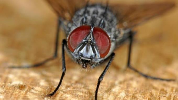 10 trucs de grand m re pour chasser les mouches de la maison - Astuce pour se debarrasser des mouches ...