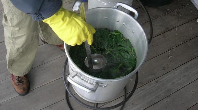 Voici comment conserver le purin d 39 ortie facilement pendant des mois - Comment faire du purin d ortie ...