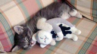 boisson-dormir-chat