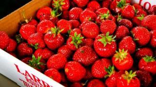 Cageot de fraises à laver
