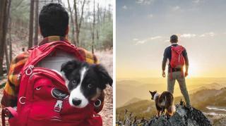 camper-avec-son-chien
