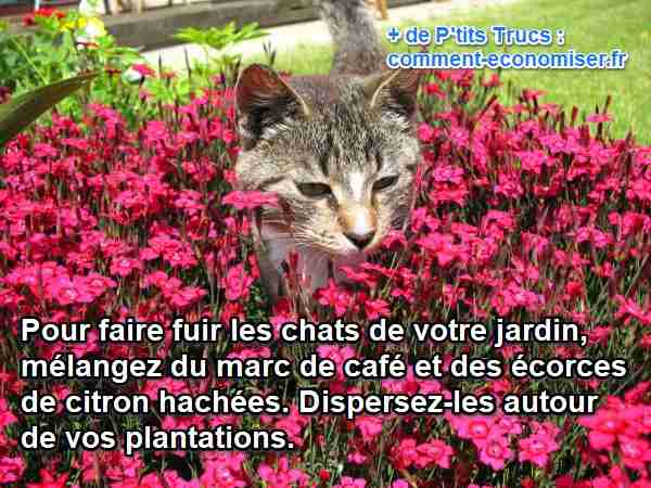 comment faire fuir les chats de votre jardin. Black Bedroom Furniture Sets. Home Design Ideas