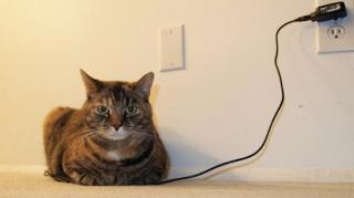 chat en train de charger