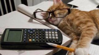 chat étudiant