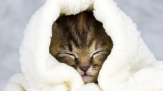 chat froid