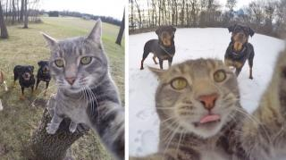 chat intelligent selfie photo gopro