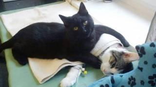 chat soigne grâce à son ronron