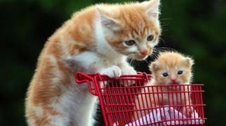 chats litière changer