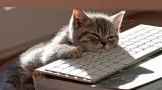 Chats qui se comportent comme nous au travail