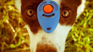 chien-clicker