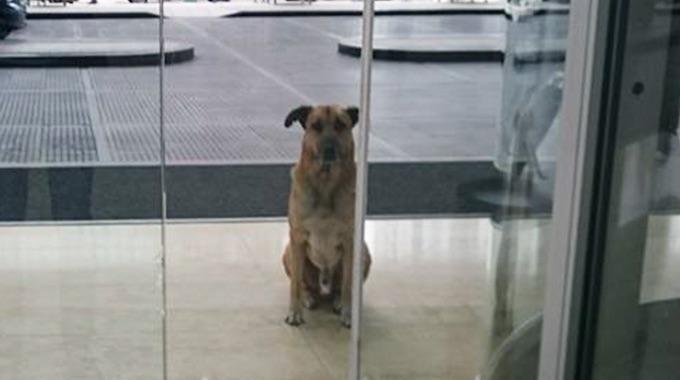Bouleversant un chien errant attend 6 mois une h tesse for Hotels qui acceptent les chiens