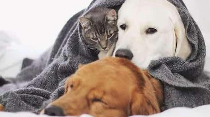ce chien sait exactement comment calmer l 39 anxi t de ses fr res. Black Bedroom Furniture Sets. Home Design Ideas