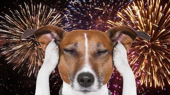 cette astuce simple vous aidera garder votre chien calme pendant les feux d 39 artifice. Black Bedroom Furniture Sets. Home Design Ideas