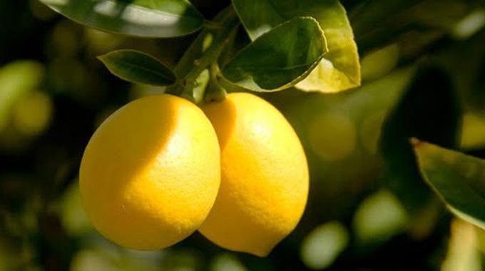 mauvaises odeurs dans le frigo utilisez un citron pour. Black Bedroom Furniture Sets. Home Design Ideas