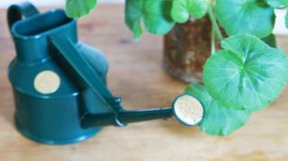 comment arroser plante pendant vacances