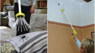 comment attraper araignée sans les tuer