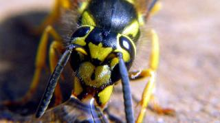 comment calmer piqure insecte douloureuse