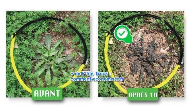 L 39 astuce rapide pour tuer les mauvaises herbes avec du - Comment desherber son jardin naturellement ...