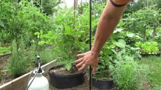 comment-eliminer-champignon-plantes-bicarbonate