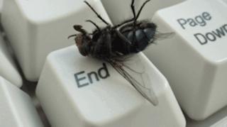 comment eloigner mouches maison