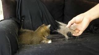 comment-enlever-poils-chats-collant