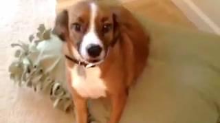 Comment faire Coussin pour chien pas cher