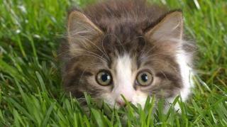 comment faire fuir chats jardin