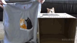 comment faire niche chat pas cher