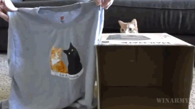 comment faire une niche pour chat avec un t shirt. Black Bedroom Furniture Sets. Home Design Ideas