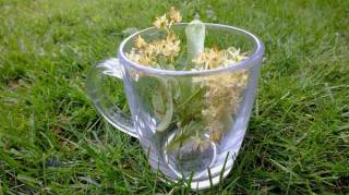comment-lutter-contre-stress-avec-plantes