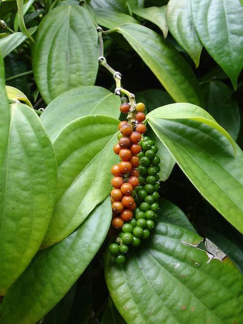 Savez vous quoi ressemblent vos fruits et l gumes pr f r s quand ils poussent - Comment pousse l ananas ...