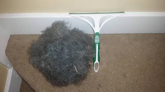 l 39 astuce pour retirer facilement les poils de chien sur la moquette. Black Bedroom Furniture Sets. Home Design Ideas