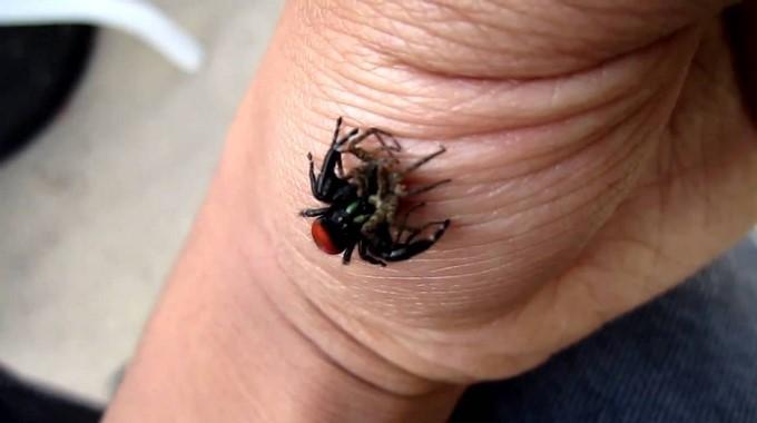 le rem de pour calmer rapidement une piq re d 39 araign e. Black Bedroom Furniture Sets. Home Design Ideas