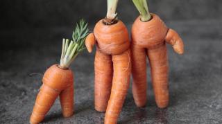 conserer-carottes