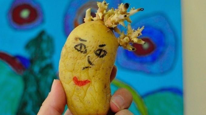 L 39 astuce infaillible pour emp cher les pommes de terre de germer - Faire germer pomme de terre ...