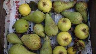 conservation pommes poires