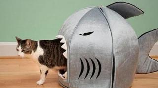 construire maison chat
