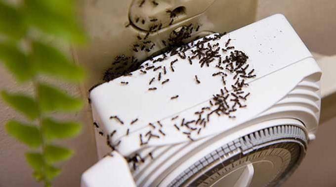 le truc qui marche pour se d barrasser des fourmis la maison. Black Bedroom Furniture Sets. Home Design Ideas