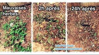 désherbant mauvaises herbes efficace 24 heures