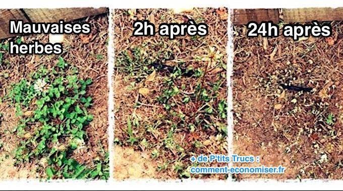 5 d sherbants faits maison que toutes les mauvaises herbes d testent travail a domicile. Black Bedroom Furniture Sets. Home Design Ideas