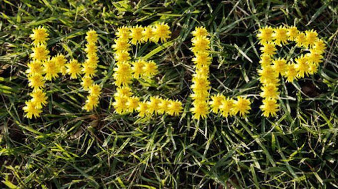Comment d sherber son jardin naturellement et gratuitement - Comment desherber son jardin naturellement ...
