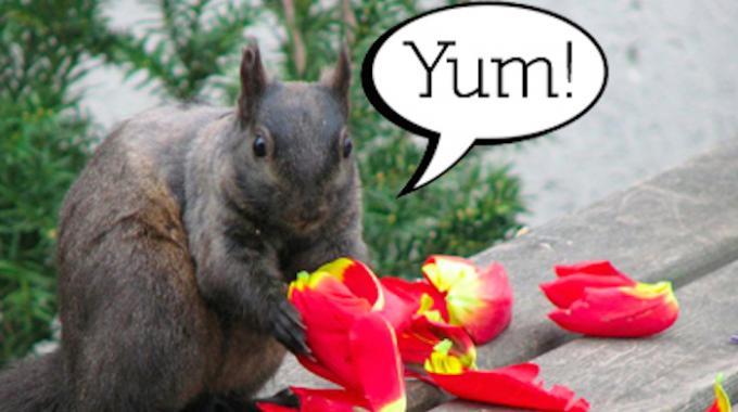 L'Astuce Efficace Pour Éloigner les Écureuils des Plantes.