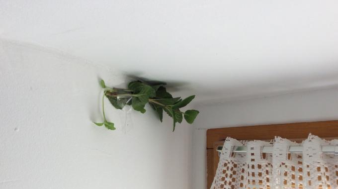 Des araign es dans votre maison le truc naturel pour les for Araignees dans maison
