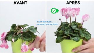 engrais pour sauver plante fleurs