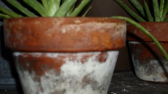 taches blanches sur les pots de fleurs le truc simple. Black Bedroom Furniture Sets. Home Design Ideas